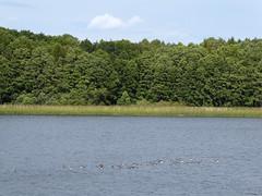 Storholmen (davidmcnuh) Tags: sweden lake forest wood water trees birds viking museum openair openairmuseum erken village vikingvillage