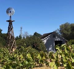 Ranch Scene (Melinda Stuart) Tags: nps martinez california fruit museum windmill shed nhs johnmuir historic ranch valley grapes vinifera foliage