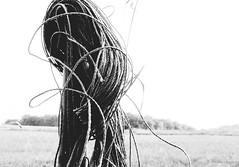 Rope mess (frankdorgathen) Tags: alpha6000 sony sony18200mm monochrome blackandwhite schwarzweiss schwarzweis stillleben stilllife banal mundane minimalism minimalistic ruhrpott ruhrgebiet bredeney essen ländlich rural pfahl pole seil rope