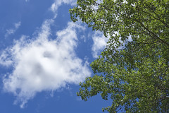 Cloud Tree Sky (Modkuse) Tags: cloud clouds sky tree brightcolors fujifilm fujifilmxt2 xt2 xf35mmf2rwr fujinonxf35mmf2rwr fujifilmxt2provia fujiprovia provia nature natural photoart