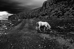 Equine (Doctorbabaguy_1) Tags: blackandwhite horse namtso tibet remote storm pastoral cloud landscape mood desolation