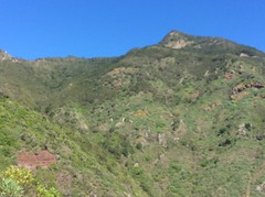 IMG_1673 (rugby#9) Tags: plants mountains bluesky outdoor tenerife canaryislands canaries rock mountainside