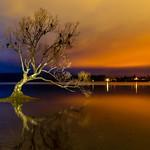 That Wanaka Tree-14 thumbnail