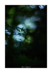 2018/8/14 - 5/18 photo by shin ikegami. - SONY ILCE‑7M2 / 七工匠  7artisans 50mm f1.1 (shin ikegami) Tags: 紅葉 sky 空 macro マクロ 井の頭公園 吉祥寺 summer 夏 asia sony ilce7m2 sonyilce7m2 a7ii 50mm 七工匠 7artisans 7artisans50mmf11 tokyo photo photographer 単焦点 iso800 ndfilter light shadow 自然 nature 玉ボケ bokeh depthoffield naturephotography art photography japan earth