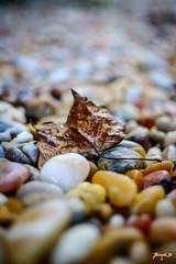 Autumn Days Are Here (Jakesb_001.NEF) Tags: autumndaysarehere autum days here pebble fall beautiful beauty colours color nikon nikkor d7100