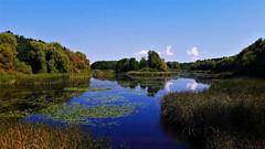 Látkép a Kányavári-szigetről (Kis-Balaton) (milankalman) Tags: swamp lake nature wildlife