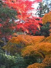 a (54) (hiromi89) Tags: japan beauty beautiful scenery flower wood pond