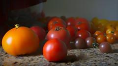 Tomatoes All Night Long (downstreamer) Tags: garden stilllife tomato vegetable