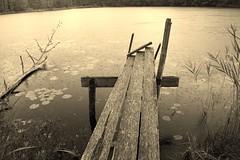 Stillhet (tusenord) Tags: stiltje fs180826 fotosondag rödgölen naturreservat norrköping fridfull monochrome lugn sjö lake brygga näckros regn