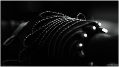 Black (frankdorgathen) Tags: abstrakt abstract bokeh fokus focus monochrome blackandwhite schwarzweiss schwarzweis schwarz black alpha6000 sony sony90mm closeup nahaufnahme macro makro