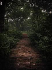 Rain (patkelley3) Tags: storm forest path mist trees