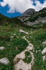 Trail from Velo polje to Dolič (happy.apple) Tags: starafužina radovljica slovenia si slovenija julijskealpe julianalps alps mountains triglavskinarodnipark gore summer poletje trail wildflowers