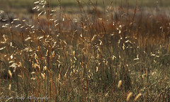Laggan, Highlands (broadswordcallingdannyboy) Tags: laggan highlands scotland cairngorms wilderness eos7d light canon copyrightleonreillyphotography donotcopy leonreilly eveninglight spey scottishlandscape beautifulscotland mood atmosphere nature mountains hills ben 70200mm zoomlens ef70200mmf4lisusm is f4l