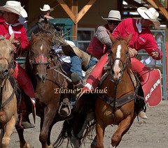Nicola Valley Rodeo 2018 (Elaine Taschuk) Tags: nicola valley rodeo cowboy horse bull bronco wrestling equine merritt cowgirl bareback steer saddle bronc tiedown roping ladies barrel racing team riding rider cpra pro jockey people livestock