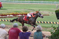 "2018-08-31 (88) r8 JD Acosta on #1 Renaissance Rosie for his 2nd win (JLeeFleenor) Tags: photos photography maryland marylandracing timonium mdstatefair fair horseracing outside outdoors jockey جُوكِي ""赛马骑师"" jinete ""競馬騎手"" dżokej jocheu คนขี่ม้าแข่ง jóquei žokej kilparatsastaja rennreiter fantino ""경마 기수"" жокей jokey người horses thoroughbreds equine equestrian cheval cavalo cavallo cavall caballo pferd paard perd hevonen hest hestur cal kon konj beygir capall ceffyl cuddy yarraman faras alogo soos kuda uma pfeerd koin حصان кон 马 häst άλογο סוס घोड़ा 馬 koń лошадь jdacosta"