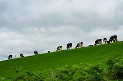 La Via Lattea ... di giorno / The Milk Way during ... the day (giannizigante) Tags: dublino irlanda kinsale
