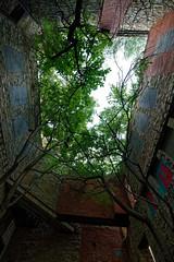Tree Roof (athomsfere) Tags: kansas city grafitti art castle old urban exploration