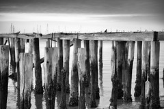 yesterday is gone (WilliamND4) Tags: capecod provincetown blackandwhite pier