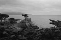 The Lone Cypress (russ david) Tags: the lone cypress monterey tree pebble beach ca california june 2018 17mile drive 17 mile golf