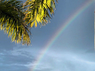 Palm Fronds By the Rainbow