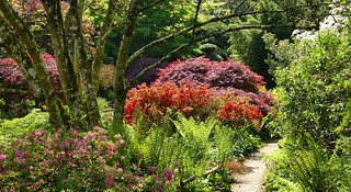 Japanese garden in the spring