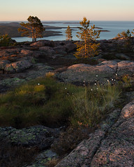 Skuleskogen Nationalpark X (Gustaf_E) Tags: forest högakustenbron kväll landscape landskap nationalpark pine pines polarull skog skuleskogen skuleskogennationalpark sommar sverige sweden tall woods ängsull ångermanland