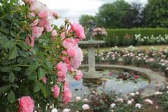 Rose Garden @ Emmetts (Adam Swaine) Tags: roses rosegardens emmetts emmettsgdns summer nationaltrust beautiful flora flowers naturelovers nature england english britain british uk ukcounties ponds kentweald kent petals pinkgreen canon counties