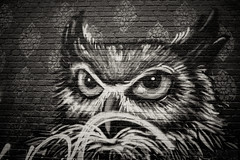 Owl Eyed. (detopics) Tags: athompson art canon android artonwalls bandeto canoneos canon70d canonphotography canonphotos canonusa detopics graf grafitti grafporn lightroom mobile mural nyc photography stare streetart urbanart vandals vndls vndlsm owl