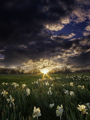Spring (patkelley3) Tags: flowers flower spring sunset clouds sky