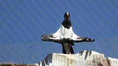 cigogne d'Abdim (surlesailesdumonde) Tags: beauval zoo parc animalier cigogne oiseau