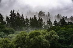 breath of the forest (Wöwwesch) Tags: mist forest landscape clouds dark breath earth wet late summer walk