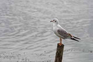 2018.09.08 Blashford Lakes (24)