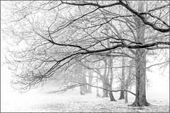 Woodland (Eva Haertel) Tags: eva haertel 5dmarkiii schwarzweis blackandwhite sw bw trees bäume silhouette struktur structure schnee snow geäst branches landschaft landscape natur nature wetter weather nebel fog mist