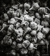 Garlic_bw (evanffitzer) Tags: garlic canoneos60d canon60d farm farming food bw blackandwhite mono monochrome gardens plants markets lightroom dark bulbs