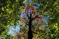 'It's here ... ' (Canadapt) Tags: autumn fall tree forest colours pattern trunk keefer canadapt