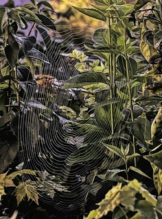 Web In Oil