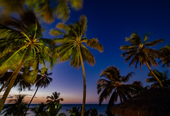 Noites de Icará (elzauer) Tags: ceará brasil night tropicalclimate palmtree starspace coconutpalmtree formalgarden sky agriculture backlit beautyinnature constellation environmentalconservation focusonforeground horizonoverland landscape milkyway nature nopeople nonurbanscene outdoors outerspace photography plant shadow silence silhouette tranquilscene tree tropicalrainforest tropicaltree
