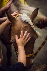 vinnie and the little hands (Jen MacNeill) Tags: mini miniature horse horses pony little hands hand child children touch healing rescued