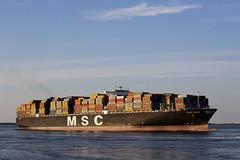 MSC GAIA (angelo vlassenrood) Tags: ship vessel nederland netherlands photo shoot shot photoshot picture westerschelde boot schip canon angelo walsoorden cargo container mscgaia