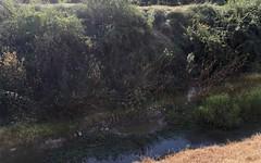Souille de sanglier - IMG_4377 (6franc6) Tags: occitanie languedoc gard 30 vaunage août 2018 6franc6 vélo kalkoff vae