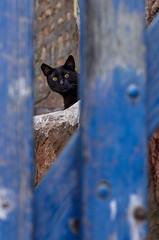 Untitled (Dany_Sternfeld) Tags: city street cat animal einhod haifadistrict israel il