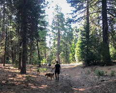 Strolling in the San Bernadino National Forest (p.bjork) Tags: