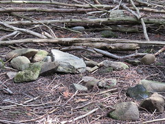 Sticks and stones (Kaarina Dillabough) Tags: stones rocks twigs branches sticks