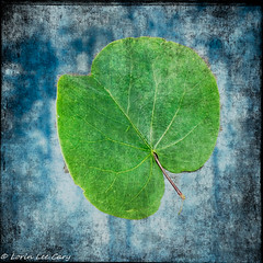 Leaf Series 25 (lorinleecary) Tags: composite leaves blue digitalart multipletextures green textured square centralcoastcalifornia morrobay