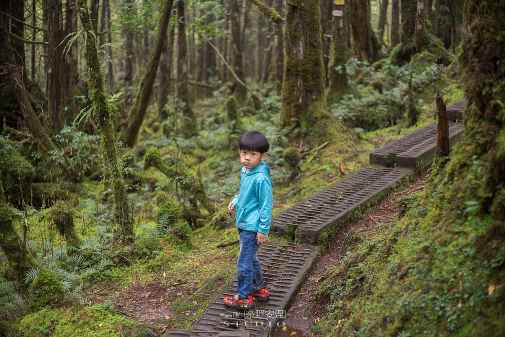 太平山翠峰湖環山步道 |走在泥濘的道路上,只為途中美景 | 宜蘭大同鄉31