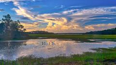 Sunrise at Pinckney NWR (dngovoni) Tags: birds egret hiltonhead ibis pinckney southcarolina sunrise water wildlife