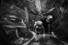 Will (17 months old) at Ripley's Aquarium (Katherine Ridgley) Tags: toronto torontotoddler toddler toddlerboy toddlerfashion cutetoddler ripleysaquarium ripleys ripleysaquariumofcanada aquarium blackwhite blackandwhite dad father son fatherandson family child kid cutekid cute