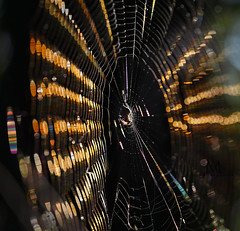 bokeh web (marianna_armata) Tags: bokehspider web light refraction pattern lines macro abstract mariannaarmata abstrakcja cliche hcs