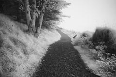 Queen Maeve's Trail (Infrakrasnyy) Tags: infrared ir 093 sony nex 5n converted camera full spectrum deep black white monochrome bw ireland sligo erie strandhill