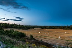 Evening in Vestby (Einar Schioth) Tags: vestby evening sky summer sigma sigma2470 trees tree grass grassland akershus canon clouds cloud vividstriking blusky nationalgeographic ngc nature night landscape photo picture outdoor einarschioth